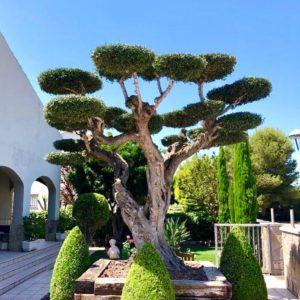 mantenimient de jardín de disseny a tarragona